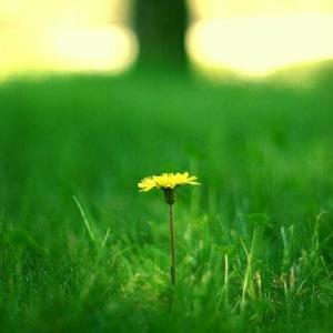 bunga-mekar