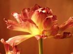 flower-377744_640
